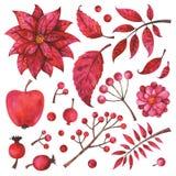 Rami, frutta, fiore, piante dipinte a mano e bacche rossi isolati su fondo bianco Royalty Illustrazione gratis