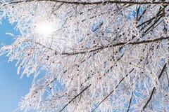 Rami glassati contro cielo blu Fotografia Stock