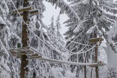 Rami glassati degli alberi, paesaggio di inverno Fotografia Stock