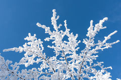 Rami innevati sui precedenti di cielo blu Fotografia Stock Libera da Diritti