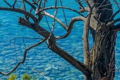 Rami morti di un albero dell'acacia immagini stock