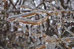 Rami nudi coperti di ghiaccio Fotografie Stock