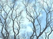 Rami nudi degli alberi Immagine Stock