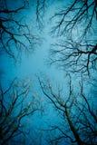 Rami nudi degli alberi Immagini Stock