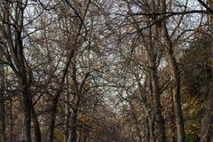 Rami nudi di autunno degli alberi sopra il cielo Immagine Stock