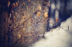 Rami nudi di autunno nelle gocce Immagini Stock Libere da Diritti