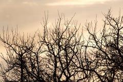 Rami nudi di un albero al sole di alba Fotografia Stock