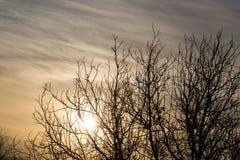 Rami nudi di un albero al sole di alba Fotografie Stock Libere da Diritti