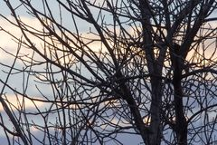 Rami nudi di un albero al sole di alba Immagine Stock Libera da Diritti