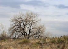 Rami nudi di un albero, orario invernale fotografie stock libere da diritti