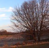 Rami nudi nel terreno agricolo di inverno immagine stock libera da diritti