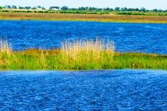 Rami paludosi di fiume della Luisiana fotografie stock libere da diritti