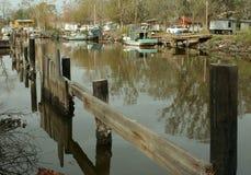 Rami paludosi di fiume della Luisiana Fotografie Stock