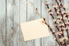 Rami sboccianti dell'albicocca della primavera e carta vuota Disposizione piana, spazio della copia Modello della carta in bianco immagine stock libera da diritti
