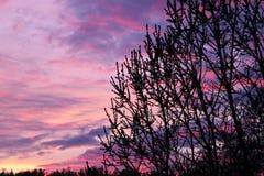 Rami scuri su un fondo di tramonto Fotografia Stock