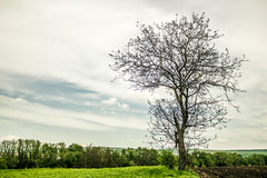 Rami secchi di un albero Fotografie Stock