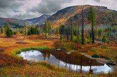 Rami secchi, lago ed erba gialla. Fotografia Stock Libera da Diritti