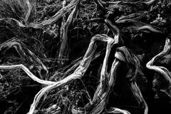 Rami secchi in palma Caldera de Taburiente della La Fotografia Stock