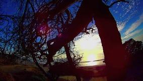 Rami in una spiaggia Carlsbad California di Ponto di groviglio 5 video d archivio