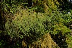 Rami verdi attillati alla luce solare in una foresta densa fotografia stock libera da diritti