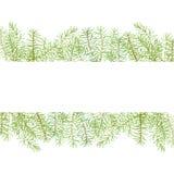 Rami verdi del pino della struttura dell'acquerello Immagini Stock