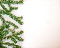 Rami verdi dell'abete isolati su fondo bianco Immagine Stock Libera da Diritti
