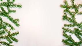 Rami verdi dell'abete isolati su fondo bianco Fotografia Stock Libera da Diritti