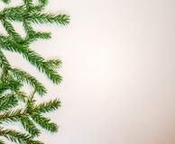 Rami verdi dell'abete isolati su fondo bianco Fotografie Stock
