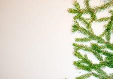 Rami verdi dell'abete isolati su fondo bianco Immagini Stock