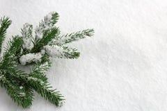 Rami verdi dell'abete sul fondo della neve Immagine Stock Libera da Diritti