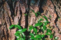 Rami verdi di un cespuglio su una corteccia di albero Immagini Stock Libere da Diritti