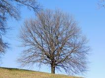 A ramificação para fora árvore de vida imagem de stock royalty free