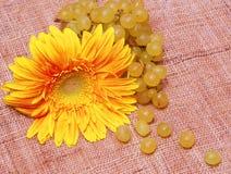 Ramificación amarilla de la flor y de las uvas Fotos de archivo libres de regalías
