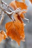 Ramificación congelada Fotografía de archivo libre de regalías