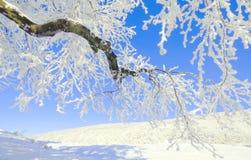 Ramificación congelada Foto de archivo libre de regalías