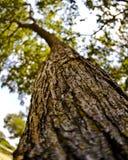 Ramificación de árbol Fotos de archivo libres de regalías