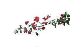 Ramificación de árbol con las flores imagenes de archivo