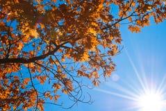 Ramificación de árbol del otoño Foto de archivo