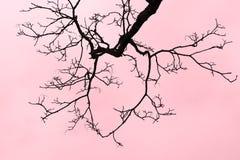 Ramificación de árbol deshojada Fotografía de archivo libre de regalías