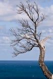Ramificación de árbol estéril en Victoria, Australia Foto de archivo