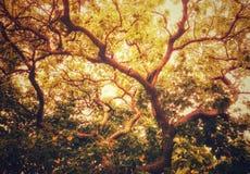Ramificación de árbol hermosa foto de archivo libre de regalías