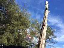 Ramificación de árbol muerta Imagen de archivo libre de regalías