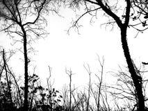 Ramificación de árbol muerta fotos de archivo