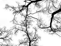 Ramificación de árbol muerta imagenes de archivo