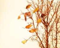 Ramificación de árbol otoñal Fotos de archivo libres de regalías