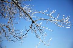 Ramificación de árbol por completo de la helada Foto de archivo libre de regalías