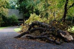 Ramificación de árbol quebrada y un camino Foto de archivo