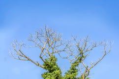 Ramificación de árbol y cielo azul Imágenes de archivo libres de regalías