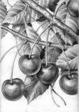 Ramificación de cerezas maduras foto de archivo