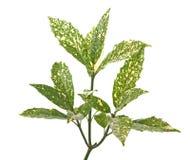 Ramificación de hojas verdes Fotos de archivo